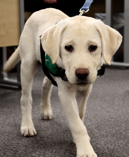 Milly at VetPlus HQ 4