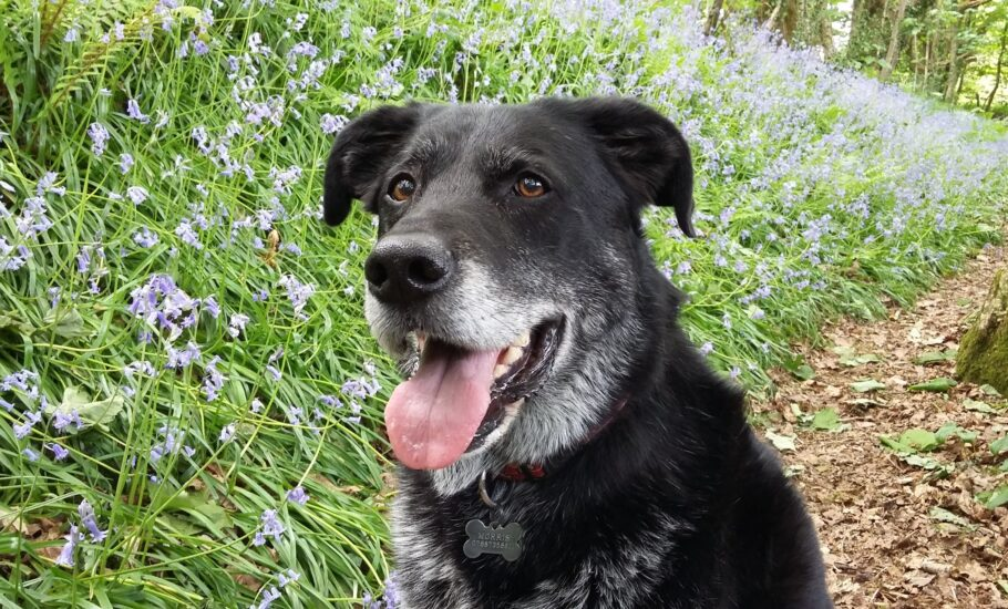 Rocky's bouncing back thanks to Synoquin dog joint supplement